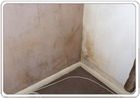 Mould on bedroom walls