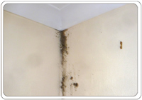mould across a ceiling